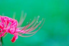 'equinox'bloem Stock Foto