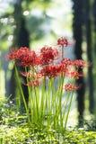'equinox'bloemen Stock Foto