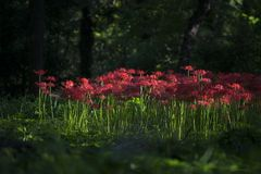 'equinox'bloemen Royalty-vrije Stock Foto