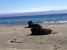 Equipa os melhores amigos que relaxam na praia Imagens de Stock Royalty Free