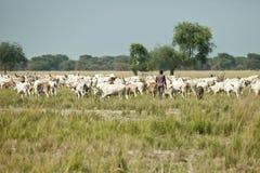 Equipaggi ed il suo gregge di bestiame, Sudan del sud Immagine Stock Libera da Diritti