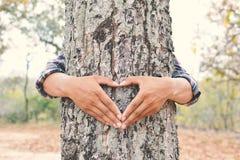 Equipaggi il grande colore dell'albero dell'abbraccio del fuoco molle selettivo del tono dei pantaloni a vita bassa, raggiro Immagini Stock