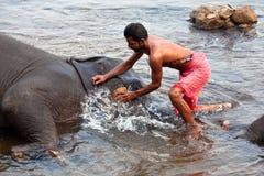 Equipaggi il lavaggio del suo elefante in India Fotografie Stock