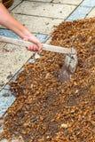 Equipaggi il lavoratore che per mezzo dell'attrezzatura della zappa sulla sporcizia dell'argilla del suolo Fotografia Stock