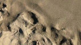 Equipaggi il piede nudo di camminata sulla spiaggia sabbiosa nell'onda di oceano video d archivio