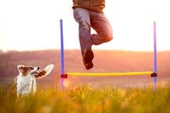 Equipaggi il salto sopra le transenne, il giovane funzionamento del cane inoltre, l'agilità e immagini stock