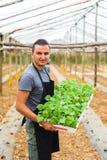 Equipaggi il vassoio della tenuta dell'agricoltore di piantine sull'azienda agricola Fotografia Stock Libera da Diritti