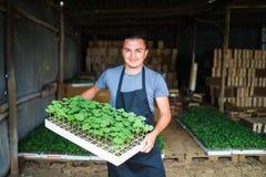 Equipaggi il vassoio della tenuta dell'agricoltore di piantine sull'azienda agricola e sorrida Fotografia Stock Libera da Diritti