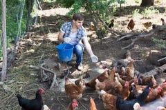 Equipaggi l'agricoltore che sparge il foraggio dell'uccello sull'iarda del paese con i polli Fotografie Stock