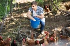 Equipaggi l'agricoltore che sparge il foraggio dell'uccello sull'iarda del paese con i polli Immagini Stock