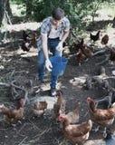 Equipaggi l'agricoltore che sparge il foraggio dell'uccello sull'iarda del paese con i polli Fotografia Stock Libera da Diritti