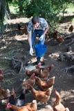 Equipaggi l'agricoltore che sparge il foraggio dell'uccello sull'iarda del paese con i polli Immagine Stock Libera da Diritti