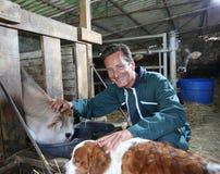 Equipaggi l'agricoltore con la mucca ed il cane in granaio Fotografia Stock