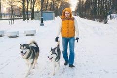 Equipaggi la camminata con l'orario invernale del cane con neve nel Malamute della foresta Fotografia Stock