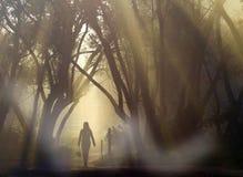 Equipaggi la camminata lungo la strada, backlit al tramonto Fotografia Stock