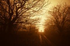 Equipaggi la camminata sulla strada in foresta con nebbia al tramonto Immagini Stock