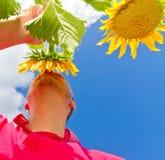 Equipaggi la condizione in un giacimento di fiore del sole - prospettiva bassa fotografie stock libere da diritti