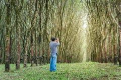 Equipaggi la fucilazione nella fila dell'albero della gomma, Tailandia Fotografie Stock