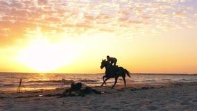 Equipaggi la guida del cavaliere sul funzionamento del cane e del cavallo sulla spiaggia sabbiosa mentre l'alba di mattina archivi video