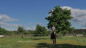 Equipaggi la guida su un cavallo marrone sul prato video d archivio