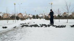 Equipaggi la moltitudine grande d'alimentazione di piccioni in parco nell'inverno archivi video