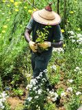 Equipaggi la piantatura dei fiori in un giardino con un cappello del sole fotografia stock