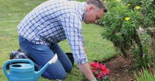 Equipaggi la piantatura della pianta nel giardino 4k archivi video