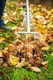 Equipaggi la raccolta punto di vista caduto della persona delle foglie di autunno del primo immagini stock