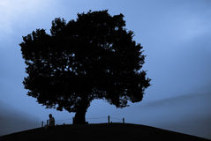 Equipaggi la seduta sotto l'albero alla cima della collina in siluetta Immagini Stock Libere da Diritti