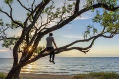 Equipaggi la seduta sul tramonto di sorveglianza dell'albero sopra il mare, godente di un momento pacifico fotografia stock