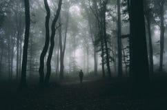 Equipaggi la siluetta sulla notte di Halloween in foresta misteriosa scura con nebbia Fotografia Stock