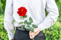 Equipaggi la tenuta della rosa rossa dietro il suo indietro per la sua donna fotografie stock libere da diritti