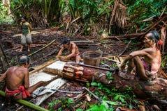 Equipaggi la tribù di Mentawai nella giungla che raccoglie le piante Immagini Stock Libere da Diritti