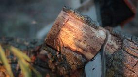 Equipaggi segare il ceppo dell'albero asciutto con la motosega video d archivio