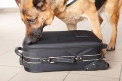Equipaje chceking del perro el oler fotografía de archivo libre de regalías