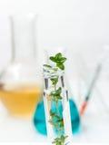 Equipamento da química, produtos vidreiros de laboratório com líquido colorido a Fotografia de Stock