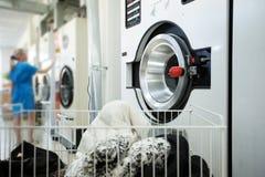 Equipamento de lavanderia e trabalhador fêmea no fundo Fotos de Stock Royalty Free
