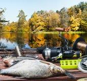 Equipamento de pesca e peixes travados foto de stock royalty free