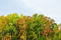 Equipamento do outono das árvores foto de stock