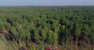 Equipamento especial do desflorestamento, vista do zangão O trabalho de ceifeira da floresta Abater da floresta grossa do pinho filme