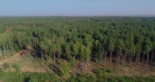 Equipamento especial do desflorestamento, vista do zang?o O trabalho de ceifeira da floresta Abater da floresta grossa do pinho filme
