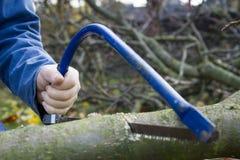 Equipe árvores do corte usando a serra afiada azul e equipmen profissionais Imagem de Stock