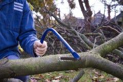 Equipe árvores do corte usando a serra afiada azul e equipmen profissionais Foto de Stock