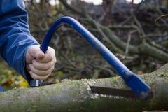 Equipe árvores do corte usando a serra afiada azul e equipmen profissionais Imagens de Stock