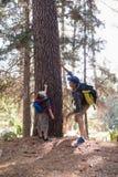 Equipe apontar acima pelo menino que está na floresta Fotografia de Stock