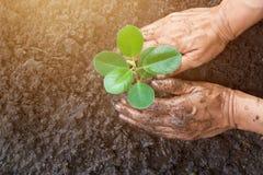 Equipe as mãos que plantam a árvore nova ao trabalhar no jardim Fotografia de Stock