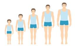 Equipe as proporções do corpo do ` s que mudam com idade Foto de Stock Royalty Free