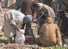 Equipe a classificação através dos vegetais no mercado local do berber As mulheres não vão geralmente introduzir no mercado imagens de stock royalty free