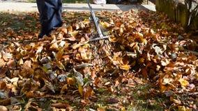 Equipe a coleta das folhas de outono caídas na jarda vídeos de arquivo