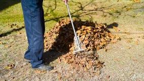 Equipe a coleta das folhas de outono caídas na jarda video estoque